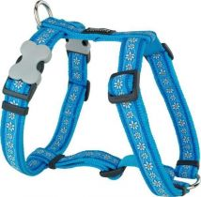 Postroj se vzorem Red Dingo 25mm x 56-80cm - Daisy Chain Turquoise